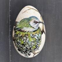 Kolibri im Nest Bild