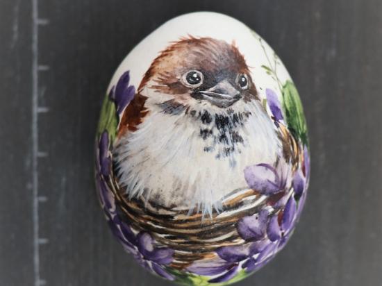 Spatz im Nest