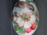 Zaunkönig  in Erdbeeren