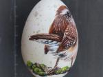 Zaunkönig auf Ei